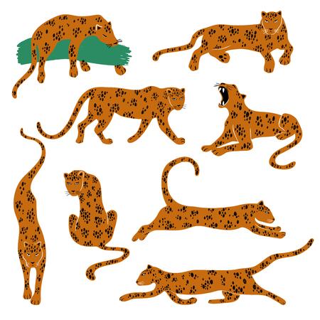 Set selvaggio di leopardo. Icone Leopard isolate in azione: in piedi, seduti, correndo, saltando, sdraiati, ringhiando. Vettoriali