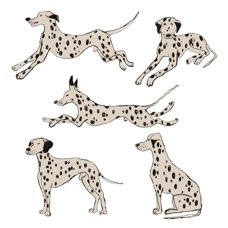 Colección de iconos de perros dálmatas aislados. Conjunto de caracteres de perro de divertidos dibujos animados. Ilustración de vector
