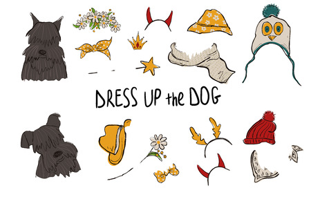 Drees up the dog collection. Funny hipster Schnauzer couple portraits with accessories.