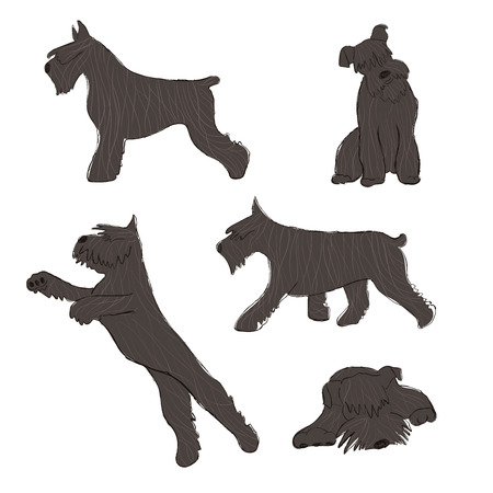 Collection of isolated Miniature Schnauzer dog icons. Funny cartoon dog character set.