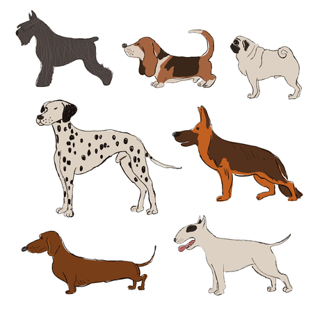Collection of isolated standing dog breeds icons. Dalmatian Dog, Basset Hound, Pug, Miniature Schnauzer, Bull Terrier, Dachshund, Shepherd. Funny cartoon dog character set.