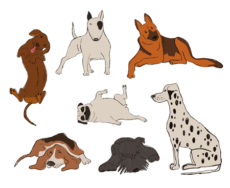 Collection of isolated dog breeds icons. Dalmatian Dog, Basset Hound, Pug, Miniature Schnauzer, Bull Terrier, Dachshund, Shepherd. Funny cartoon dog character set.  イラスト・ベクター素材