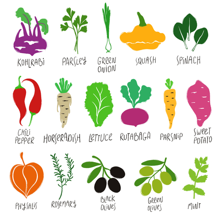 Funny collection of flat colorful vegetables and herbs. Isolated vector icons. 일러스트