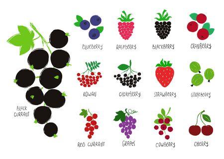 Zestaw kolorowych lasów. Kolekcja jagodowa - porzeczka, jagoda, malina, jeżyna, żurawina, jarzębina, aronia, truskawka, agrest, winogrona, wiśnia, brusznica. Ilustracje wektorowe