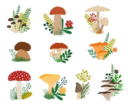 Colorful autumn forest set with fungi and plants. Mushroom collection - honey agaric, aspen, parasol, porcini, chanterellel, fly agaric, slippery jack, hedgehog, morel, oysters.