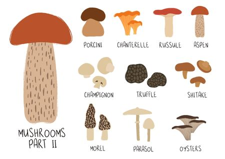Colorful forest set. Mushroom collection - porcini, chanterelle, russule, aspen, champignon, truffle, shitake, morel, parasol, oysters.  イラスト・ベクター素材