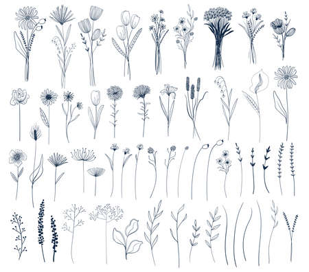 Set of isolated vector flowers and bouquets. Spring and summer line art botanical collection. Garden and wildflowers. Illustration
