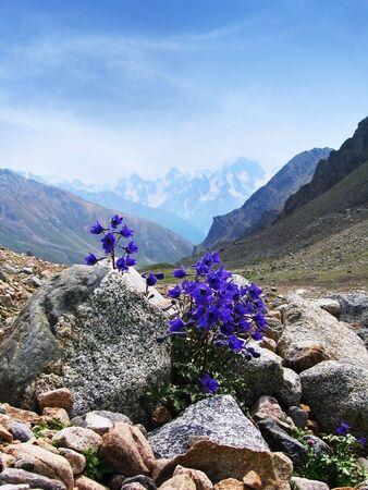 Paarse bloemen op een achtergrond van hoge bergen Stockfoto