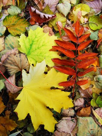 Colorful, fallen, autumn leaves lying on the ground Stock Photo