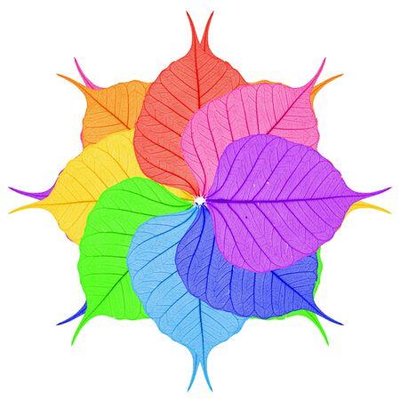 Acht heldere bladeren op een witte achtergrond