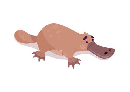 Platypus vector, aquatic mammal animal. Funny beast from Australian series. Fluffy animal in cartoon style isolated on white background. Illustrations for childrens books, encyclopedias, posters