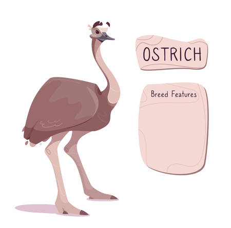 Vector illustration of an Australian emu ostrich. Funny exotic bird of brown color on long legs. The inscription on wooden plate and place to describe the breed. For reference books, posters. Isolated