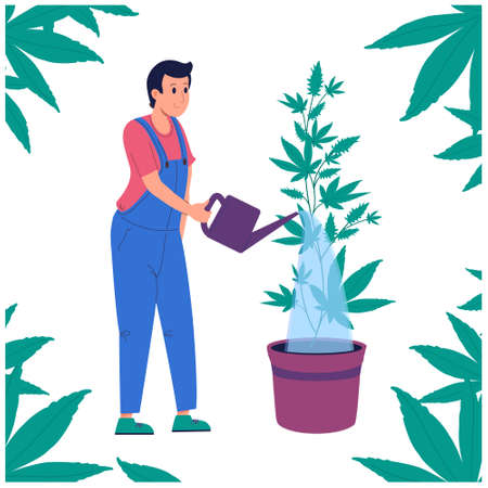 Man watering hemp from a watering can.Growing marijuana indoor. Indica, Sativa, thc, cbd for medical and recreational purposes, 4.20. Farm in the cultivation of marijuana. .vector illustration isolated