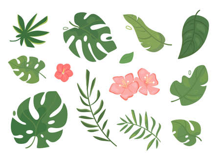 Set of vector tropical leaves. Green foliage of exotic palms and trees, pink flowers. Flat style. Vettoriali