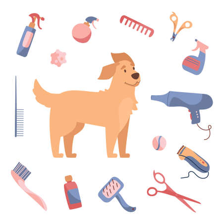 Blow-dry your dogs hair. Dog grooming in Cartoon style. Golden Retriever and care products, shampoos, wire cutters, combs, scissors. Vector illustration isolated on white background Vectores