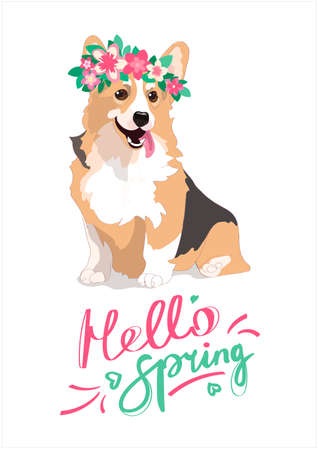 Merry spring poster with welsh corgi in a wreath of flowers. A contented dog with a protruding pink tongue. The dog is ginger. lettering hello spring. Vector greeting card isolated on a white backgrou.