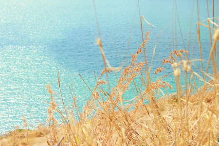 Flower of grass on the cliff and sea, Phuket, Southern of Thailand Stock Photo