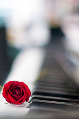 Valentines Day: Red rose on piano keyboard blurred background for various events: anniversary, celebration, love, wedding, surprised gift, birthday party, graduation, engagement, party and sharing Stock Photo