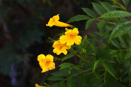 Flowers in yellow tones expressing the best colors of nature, ready to apply in your design Reklamní fotografie