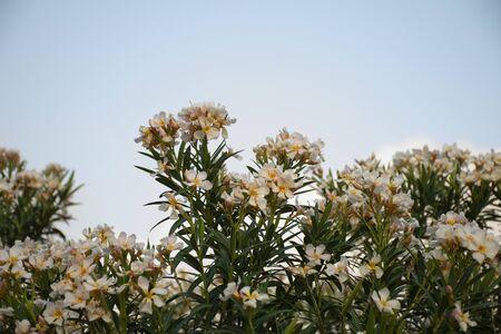 Fleurs mexicaines typiques semées le long des parcs urbains Banque d'images