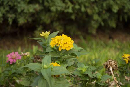 Fleurs mexicaines typiques semées le long des parcs urbains