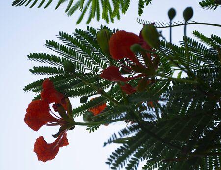 fleurs rouges sur le bord de la route dans la ville Banque d'images