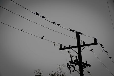 birds perched on the wires of the electrical installation