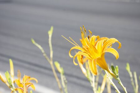 yellow flowers on the Mexican roadside Banque d'images