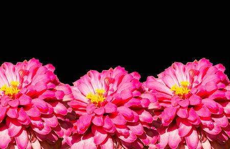 Black background with flowers for a perfect wallpaper Banque d'images