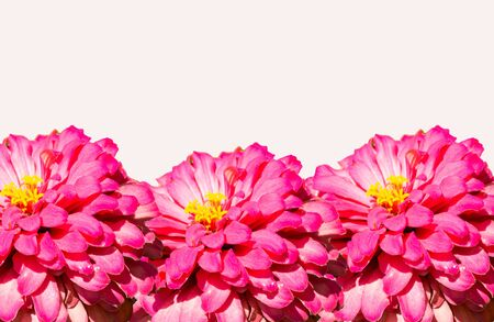 White background with flowers for a perfect wallpaper