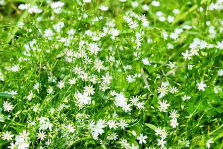 champ de fleurs: Fleurs paysage magnifique sur le terrain en �t� ou le printemps Banque d'images