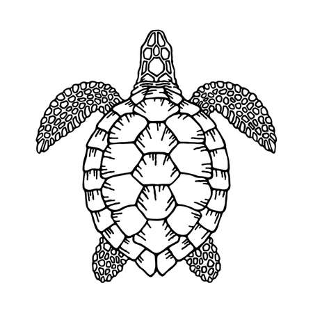 Decorative graphic vector turtle for coloring book with vintage outline style.Environment pollution, ecological problem isolated vector illustrations. Planet protection t shirt print idea.