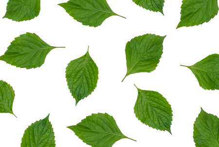 Natural leaves on white background, pattern style Stock Photo