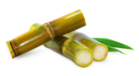 Sugar cane isolated on white background 스톡 콘텐츠
