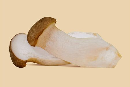 Fungo di ostrica reale (Pleurotus eryngii) su bianco
