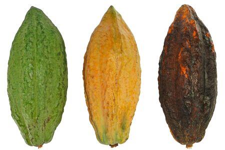 Cacao fruit, Cocoa fruit isolated on white background