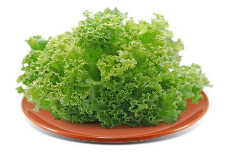 Fresh lettuce salad isolated on white background Stock Photo
