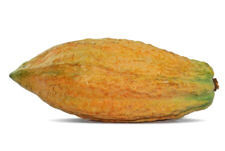 Cacao fruit isolated on white background Stock Photo
