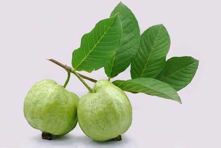Fresh guava fruit isolated on white background