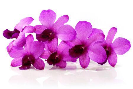 purple Phalaenopsis orchid flower isolated on white background