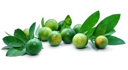 Group of kumquat fruit isolated on white background