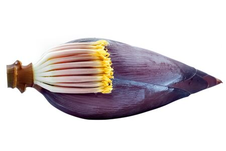 Banana flower isolated on white background Stockfoto