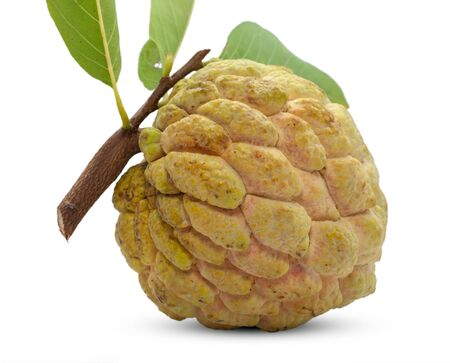 Annona or Custard apple isolated on white background Stockfoto