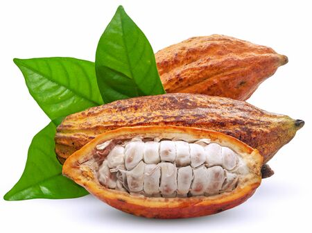Cocoa fruit or Cacao fruit isolated on white background