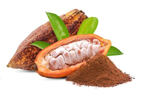 Cacao or Cocoa fruit isolated on white background Banque d'images