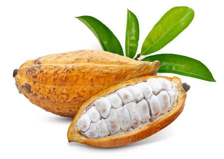 Cacao fruit or Cocoa fruit isolated on white background