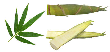 Bamboo shoot and leaf isolated on white background Banco de Imagens - 152258650