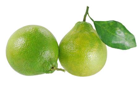 Neck Orange or Citrus reticulata Blanco fruit isolated on white background Standard-Bild