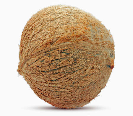 Coconut fruit isolted on white background