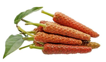 Long pepper isolated on white background Standard-Bild